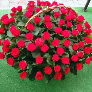 Кошик 101 червона троянда