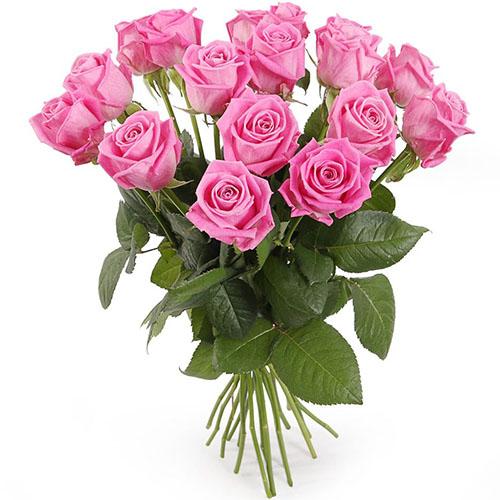"""фото 15 троянд """"Аква"""""""