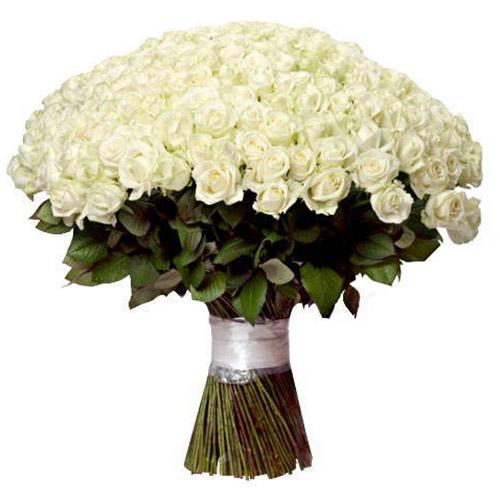 201 біла троянда фото букета