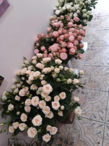 rozy v chernovcah