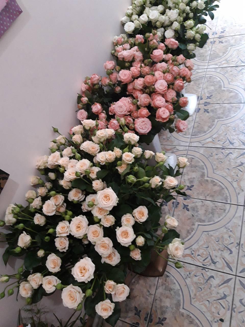 rozy v chernivcah