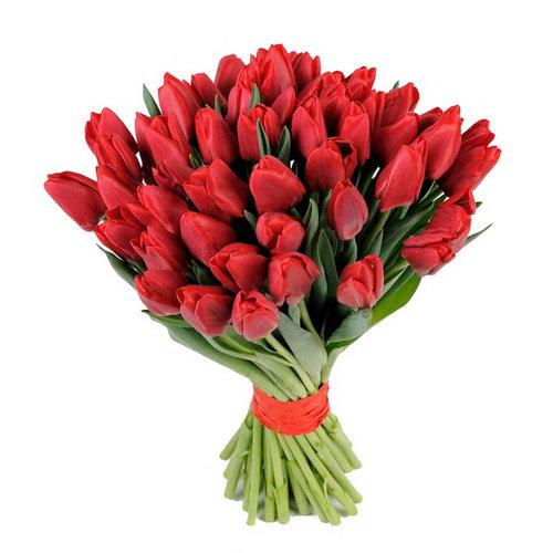 букет 49 червоних тюльпанів фото
