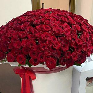 301 красная роза в вазоне в Черновцах фото