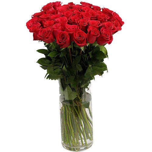 фото Роза импортная красная