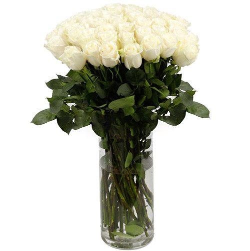 фото Троянда імпортна біла (поштучно)