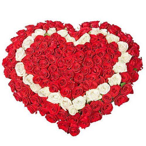 фото букета 101 троянда серцем: червона, біла, червона