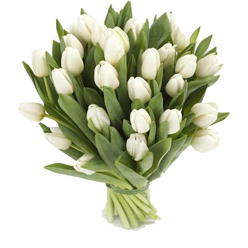 букет 25 білих тюльпанів фото