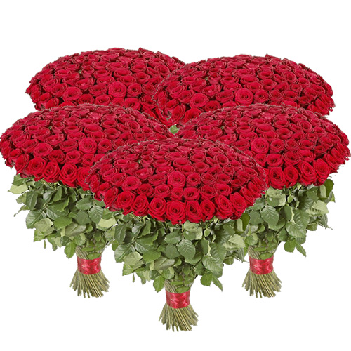 букет 501 червона троянда